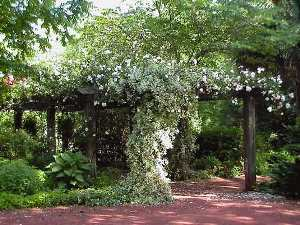 Садовые перголы