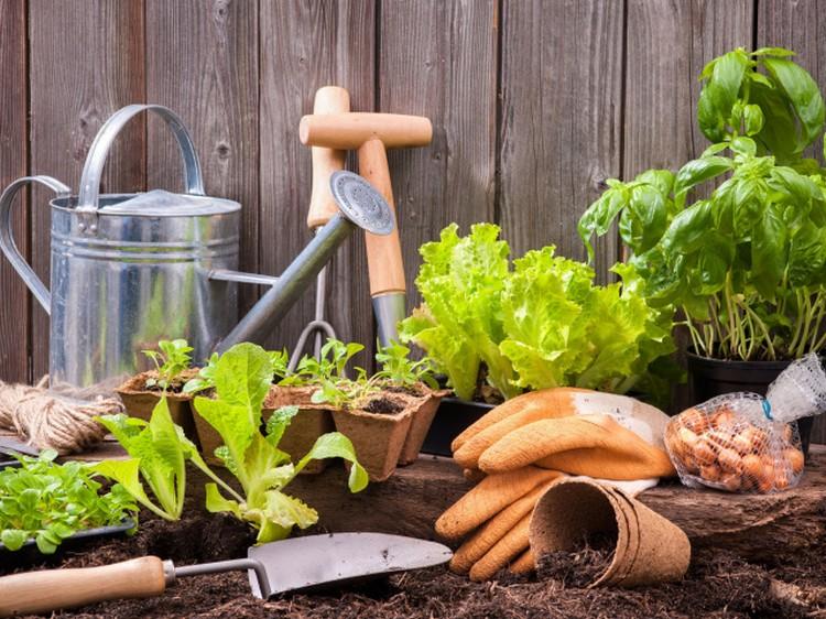 О выборе садового инструмента